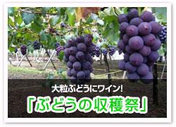 大粒ぶどうにワイン!「ぶどうの収穫祭」