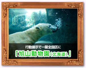 旭山動物園(北海道)