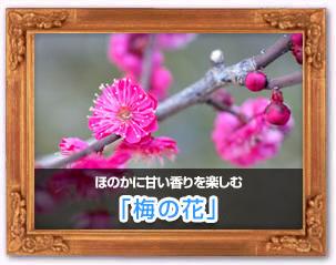 「梅の花」