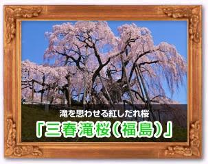 「三春滝桜(福島)」