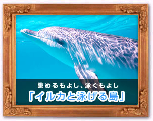 イルカと泳げる島
