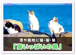 猫いっぱいの島