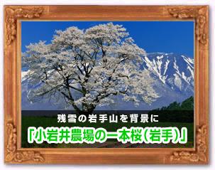 「小岩井農場の一本桜」