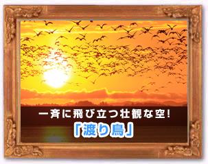「渡り鳥」