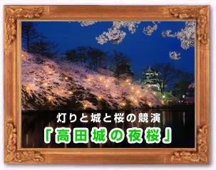 「高田城の夜桜」