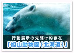 「旭山動物園(北海道)」
